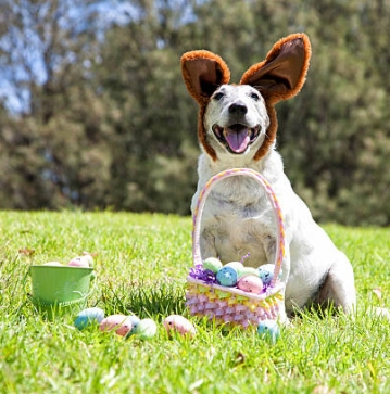 Smiling Easter Bunny Dog